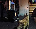 Angus and the stove (8354477225).jpg