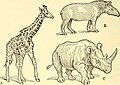 Animal biology (1938) (18193122102).jpg