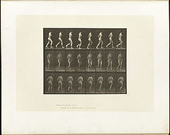 Animal locomotion. Plate 70 (Boston Public Library).jpg