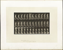 Animal locomotion. Plate 76 (Boston Public Library).jpg
