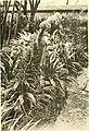 Annali di botanica (18223389878).jpg