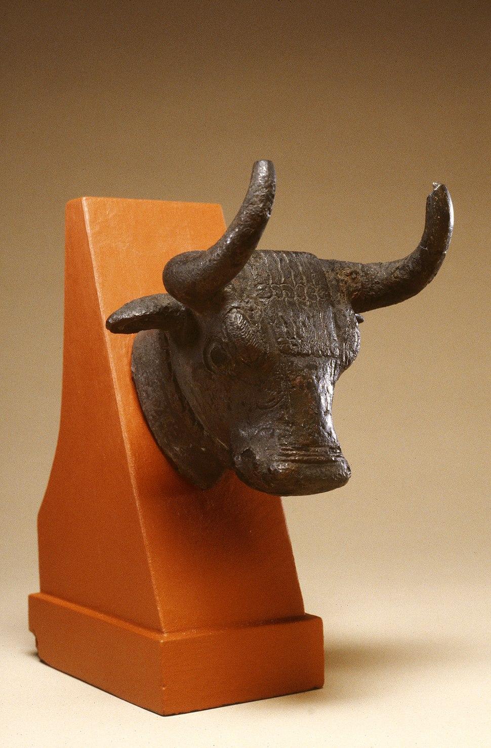Armenian - Head of a Bull - Walters 54791 - Three Quarter