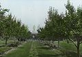 Armor Estate, Forest, IL – Orchard garden (5167688165).jpg