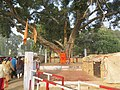 Around and near Anand Bhavan, Swaraj Bhavan, Allahabad, IRCTC 2017 (1).jpg