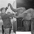 Artiesten treden in circus Boltini op ( Tom Kelling olifant), Bestanddeelnr 914-1000.jpg