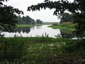 Assam 133.jpg