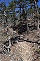 Athens-Big Fork Trail 2.jpg