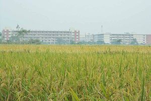 Jessore University of Science & Technology - Surrounding natural beauty of JUST