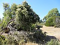 Australian garden (8044475687).jpg