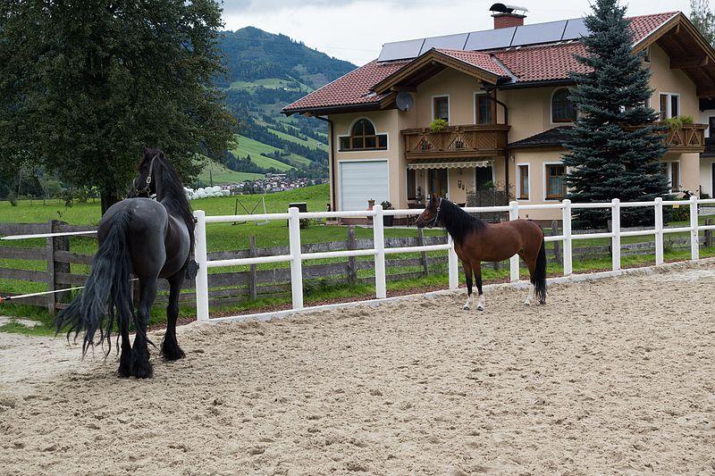 File:Austrian horse and pony (25899575926).jpg