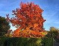 Autumn (30577329902).jpg
