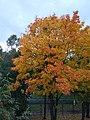 Autumn from the school window.jpg