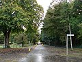 Avenue at Castletown House, Celbridge - geograph.org.uk - 1008014.jpg