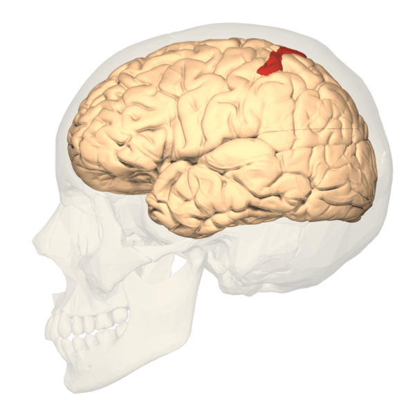 File:BA5 - lateral view.png