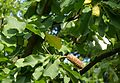 Bad-homburg-kurpark-flora-0084.jpg