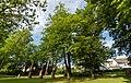Bad Bergzabern Friedhofstraße (Alter Friedhof) 014 2018 05 09.jpg