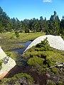 Baixant de l'estany de Malniu P1300551.jpg