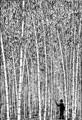 Bamboo (PSF).png