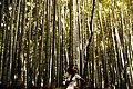 Bamboo Beauty - panoramio.jpg