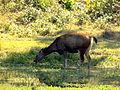 Bangabandhu Safari Park Cox's Bazar 16.JPG