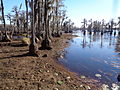 Banks Lake 2015 water lowered to control coontail moss 3.JPG