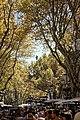 Barcelona - La Rambla - Golden Autumn Holiday Atmosphere.jpg