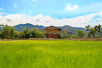 Bario - Paddy rice field in Bario