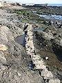 Basalt dyke, St Monans - geograph.org.uk - 1725844.jpg