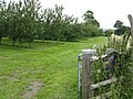 Batchfields Farm orchard - geograph.org.uk - 892575.jpg