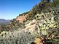 Bear Mountain, Sedona, Arizona - panoramio (53).jpg