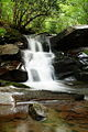 Beautiful-Seneca-Waterfall ForestWander.JPG