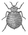 Bedbug (PSF).png