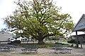 Berwick Akoonah Park Tree.JPG