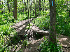 Billy Goat B Trail 5.jpg