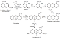 Biosíntesis de fenazinas.png