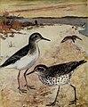 Bird-lore (1911) (14568909547).jpg