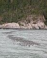 Bird Raft (223202499).jpg
