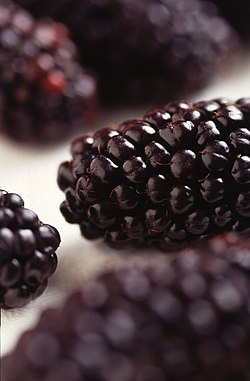 meaning of bramble