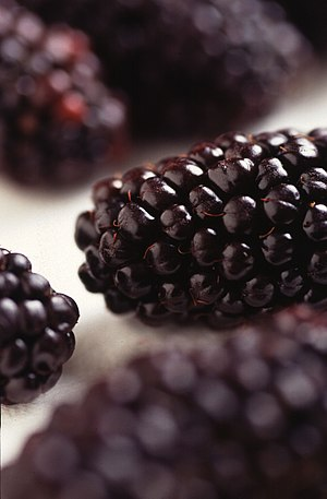 Black Butte is a new blackberry release by ARS...