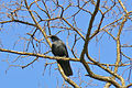 Black bird old tree.jpg