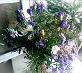 Blaue Blumen - Blue Flowers.jpg