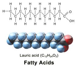 Blausen 0396 FattyAcid