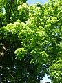 Bled (8897494789).jpg