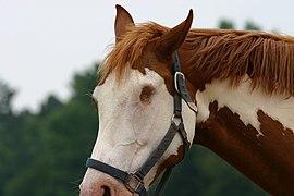 Blind horse.jpg