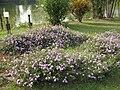Blossom, Vanganga Lake, Dadra - panoramio.jpg