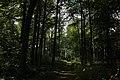 Bois d'Acren 08.jpg