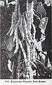 Bolgiano's spring 1969 (1969) (20391160365).jpg