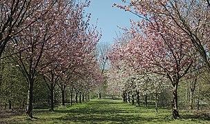 Bondues parc vert bois allee cerisiers bis.jpg