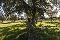 Bosco delle Falanite Tricase.jpg