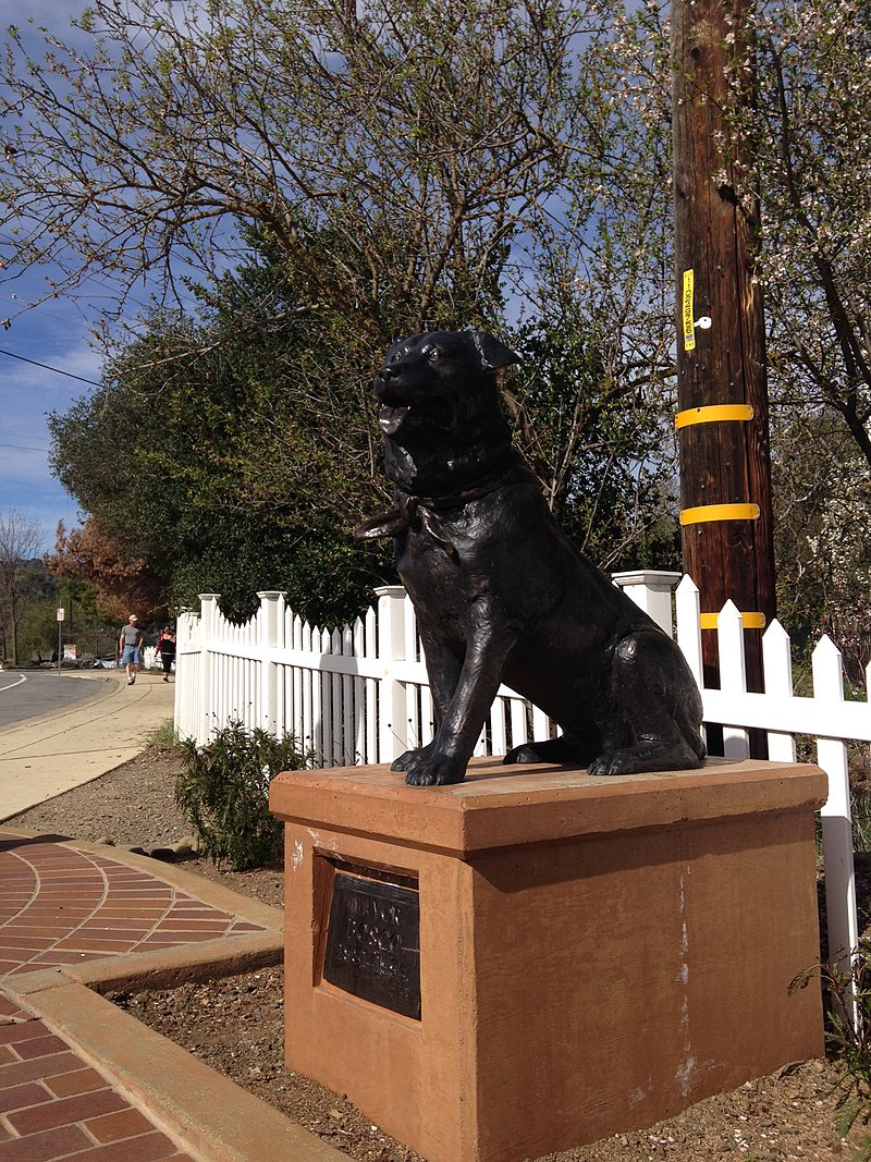 800px Bosco the Dog Mayor of Sunol 7 animals that ran for public office